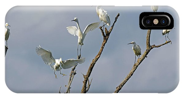Snowy Egret Inn IPhone Case