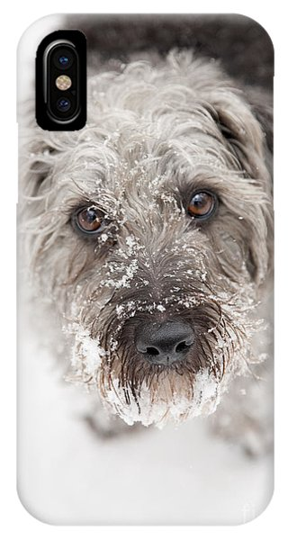 Dog iPhone X Case - Snowy Faced Pup by Natalie Kinnear
