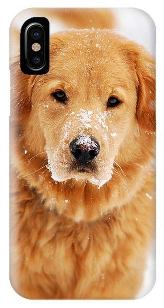 Snowy Golden Retriever IPhone Case