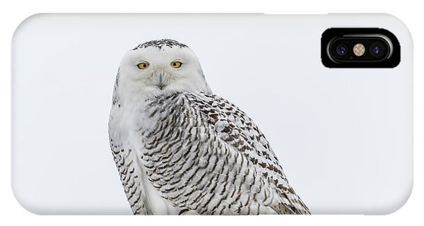 Snowy Owl 2014 1 IPhone Case