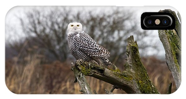 Snowy Owl At Boundary Bay  Phone Case by Pierre Leclerc Photography