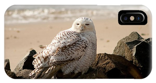 Snowy Owl At Forsythe IPhone Case