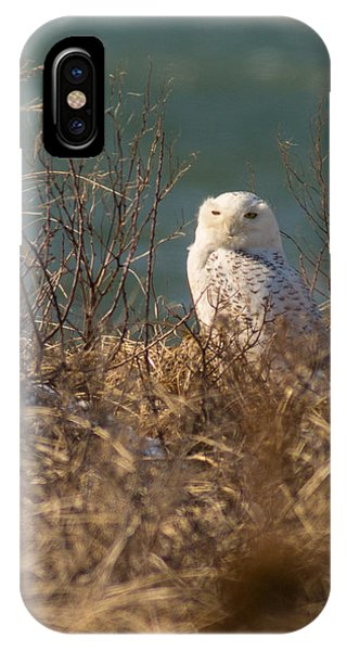 Snowy Owl At The Beach IPhone Case