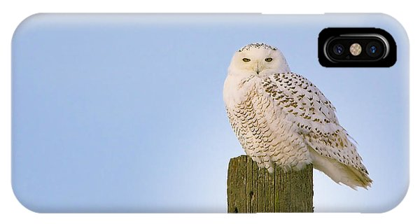 IPhone Case featuring the photograph Snowy Owl - Harfang Des Neiges - Bubo Scandiacus by Nature and Wildlife Photography