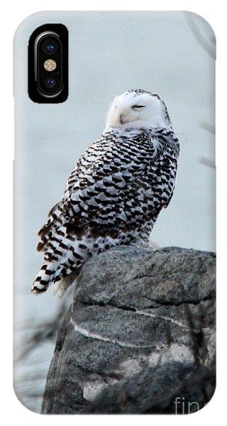 Snowy Owl I IPhone Case