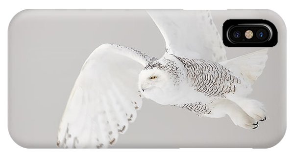 Snowy Owl In Flight 4 IPhone Case