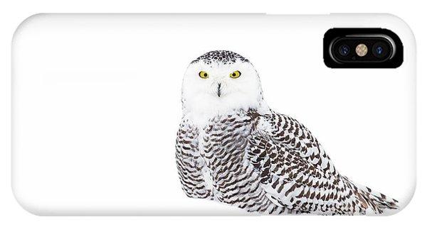 Winter iPhone Case - Snowy Owl In Winter Snow by Jim Cumming