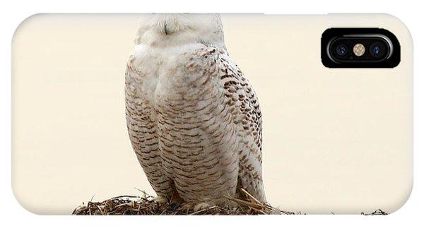 Snowy Owl Iv IPhone Case