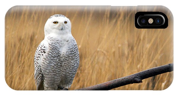 Snowy Owl On Branch IPhone Case