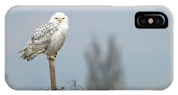 Snowy Owl On Fence Post 2 IPhone Case