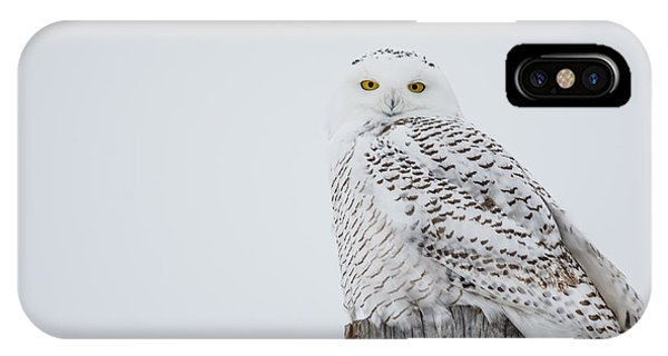 Snowy Owl Perfection IPhone Case
