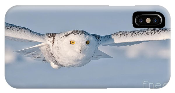 Snowy Owl Pictures 10 IPhone Case