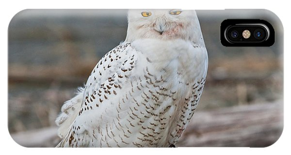 Snowy Owl Watching From A Driftwood Perch IPhone Case