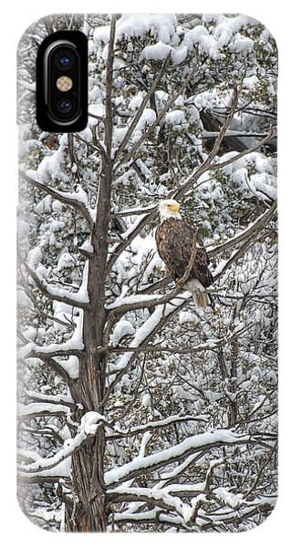 IPhone Case featuring the photograph Snowy Perch Bald Eagle by Britt Runyon