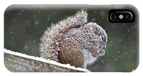 Snowy Squirrel IPhone Case