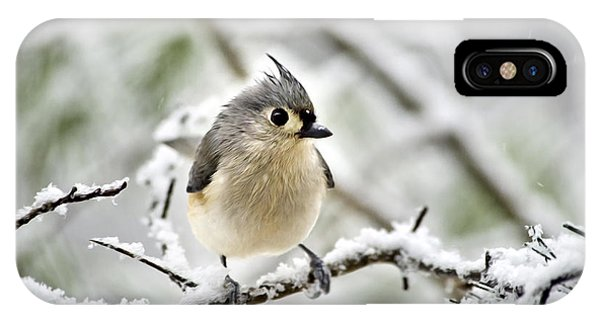 Snowy Tufted Titmouse IPhone Case