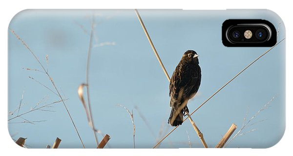 Soaking In The Sun IPhone Case