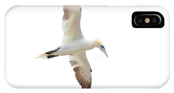 Soarin' Gannet. IPhone Case