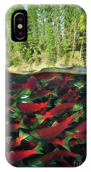 Mp iPhone Case - Sockeye Salmon Run by Yva Momatiuk John Eastcott