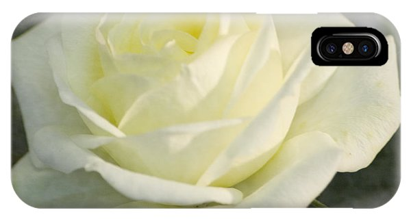 Soft Cream Rose IPhone Case
