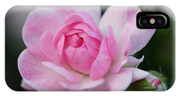 Soft Pink Miniature Rose IPhone Case