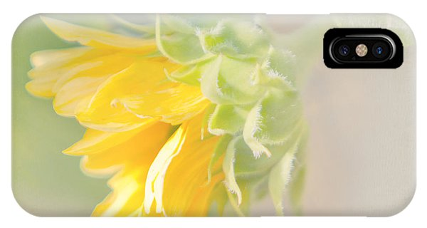 Soft Yellow Sunflower Just Starting To Bloom IPhone Case