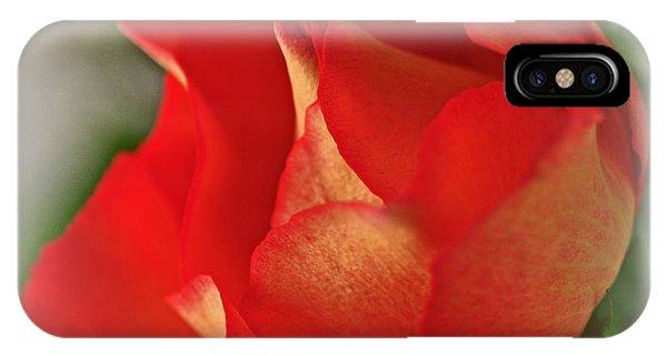 Soften Rose IPhone Case