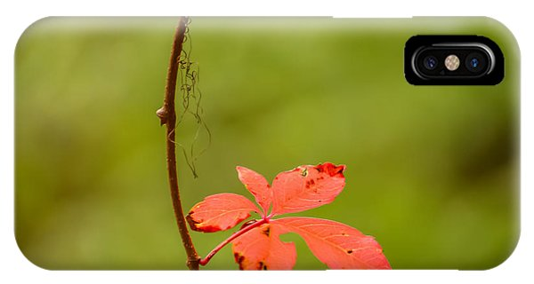 Solitary Red Leaf IPhone Case