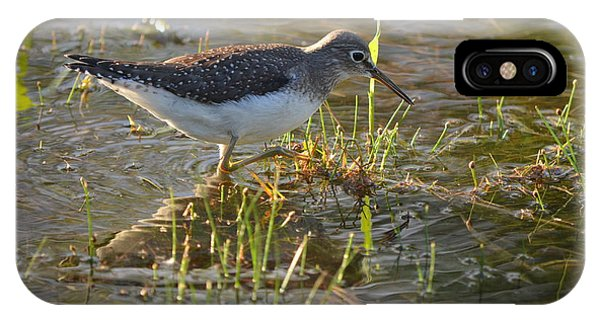 Solitary Sandpiper 2 IPhone Case