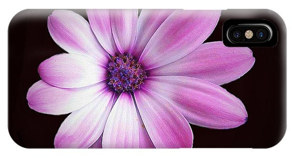 Solo Purple Flower IPhone Case