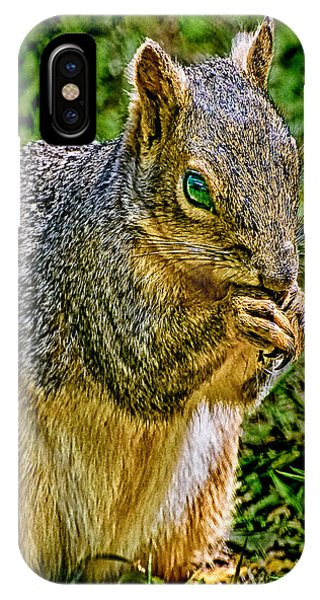 Some Squirrels Are Big IPhone Case