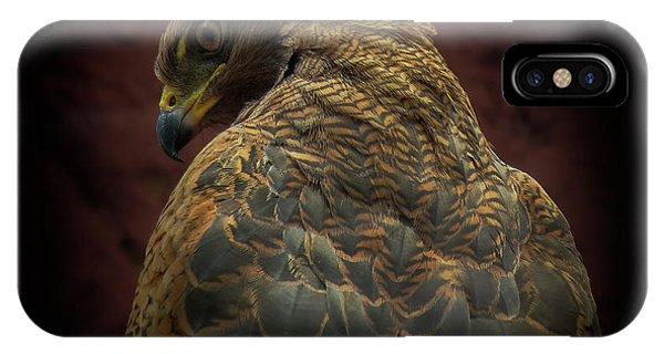 Hawk iPhone Case - Somebody Watch Me-savanna Hawk by Ferdinando Valverde