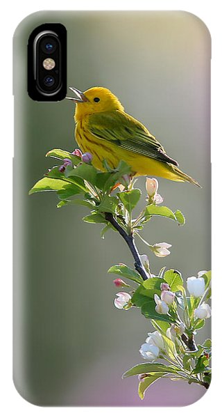 Warbler iPhone Case - Song Of Spring by Rob Blair