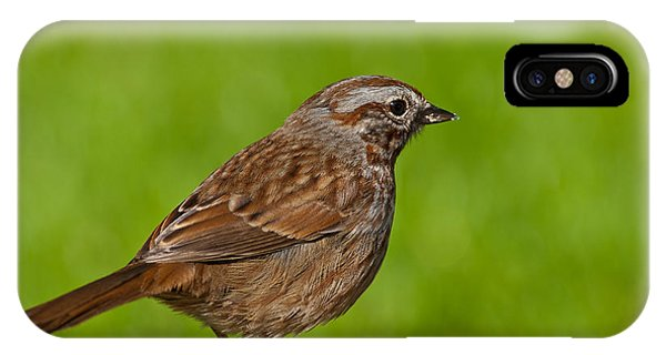 Song Sparrow On A Log IPhone Case