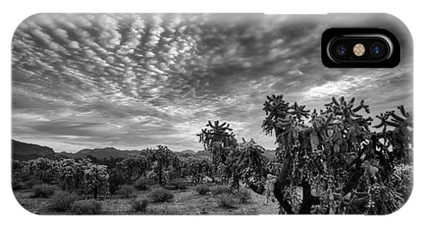 Teddy Bear Cholla iPhone Case - Sonoran Skies At Dawn In Black And White  by Saija  Lehtonen