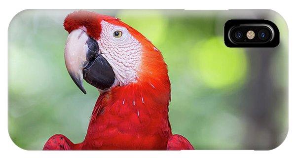 Scarlet iPhone Case - South America, Brazil, Amazon, Manaus by Ellen Goff