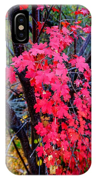 Season iPhone Case - Southern Fall by Chad Dutson