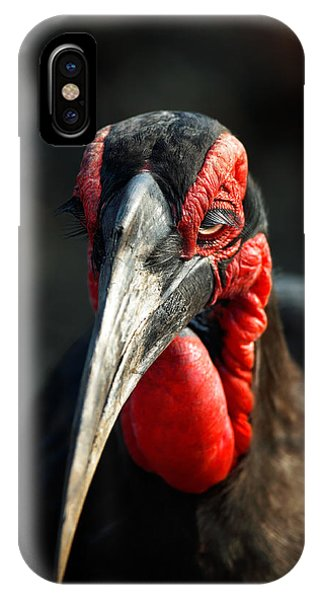 Head And Shoulders iPhone Case - Southern Ground Hornbill Portrait Front View by Johan Swanepoel