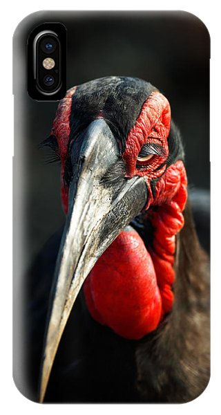 Southern Ground Hornbill Portrait Front View IPhone Case