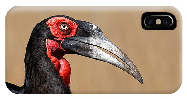Head And Shoulders iPhone Case - Southern Ground Hornbill Portrait Side View by Johan Swanepoel