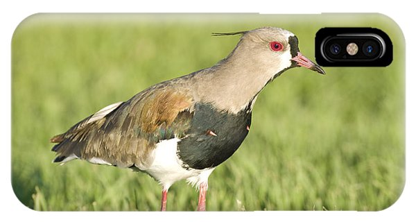 Southern Lapwing IPhone Case