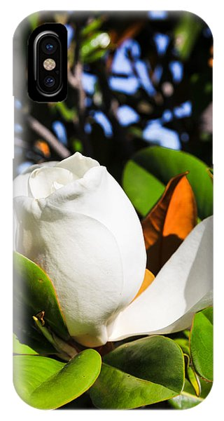 Southern Magnolia Blossom IPhone Case
