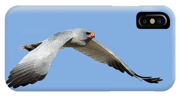 Hawk iPhone Case - Southern Pale Chanting Goshawk In Flight by Johan Swanepoel