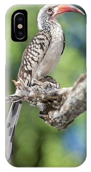 Southern Red-billed Hornbill IPhone Case