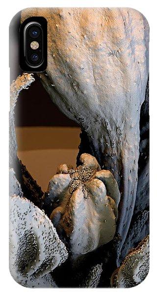 Spanish Pepper Flower Phone Case by Stefan Diller