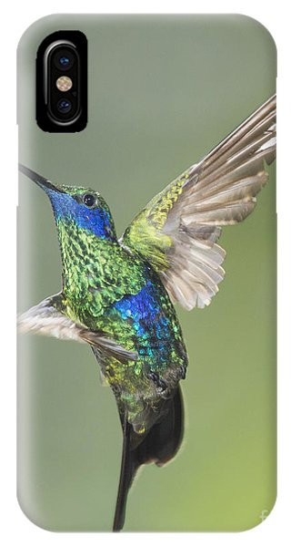 Sparkling Violet-ear Hummingbird IPhone Case