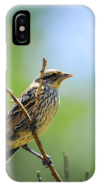 IPhone Case featuring the photograph Sparrow On A Branch by Don and Bonnie Fink
