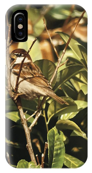 Sparrow On The Branch Phone Case by Alberto Ponno