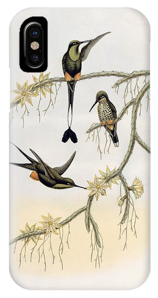 Humming Bird iPhone Case - Spathura Solstitialis by John Gould