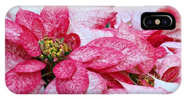 Specialty Poinsettias  Phone Case by Donna Pagakis